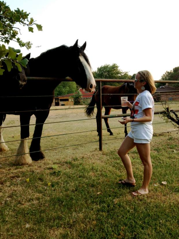 Summer 2013 - I was probably trying to convince this Clydesdale to start watching Breaking Bad.